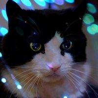 кот и интернетзависимость :: Алёна ChevyCherry