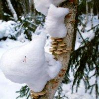 Зимний грибной сезон. :: Александр Рейтер