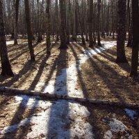 IMG_3907 - Начинается сезон теней :: Андрей Лукьянов