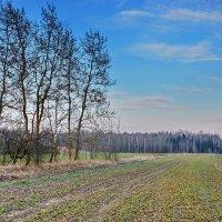 В  поле.... :: Валера39 Василевский.