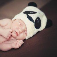 Панда-малыш :: Екатерина Тырышкина