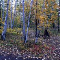 осень :: Андрей Шипицын