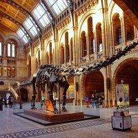 В музее естествознания :: Free
