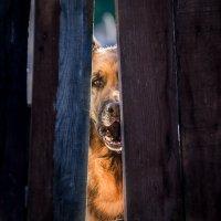 Окно в мир :: Владимир Голиков