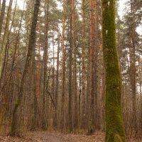 Могучий лес :: Артём Исаев