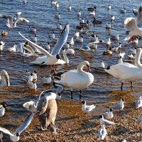 Птицы :: Teresa Valaine