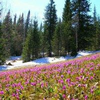 Весна в Шерегеше :: Милешкин Владимир Алексеевич