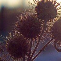 Зимние цветы :: Светлана Игнатьева
