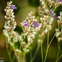 Цветы :: vcherkun