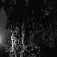 Одинокая ель :: Константин Фролов