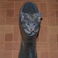 Кот в сапоге! :: Виталий Городниченко