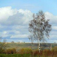 Весенний лёгкий веет ветерок.... :: nadyasilyuk Вознюк