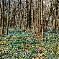 Голубые поляны. :: Чария Зоя