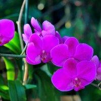 Орхидея. :: Маргарита ( Марта ) Дрожжина