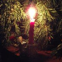 Огонь под сосной :: Ксения Фирсова