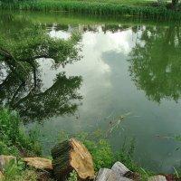 Река Цна,г.ТАМБОВ :: °•●Елена●•° Аникина♀