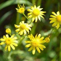 цветочки :: Olga Kolmychenko