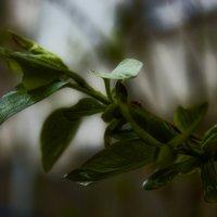 листья :: VAHE DILANCHYAN