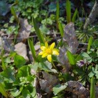 Весна в лесу))) :: Ксения Довгопол