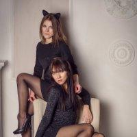 Кошечки :: Катерина Морозова