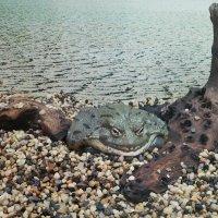 солидная лягушонка :: Ксения