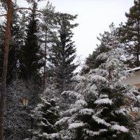 Снежный февраль :: Агриппина