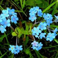 Незабываемые цветочки. :: nadyasilyuk Вознюк