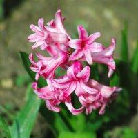 цветы :: владимир Баранов