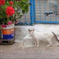 Греческий котик :: Наталия Григорьева