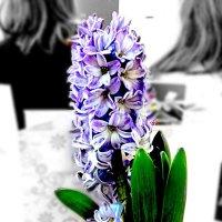 Цветок :: Варвара Колюшкина