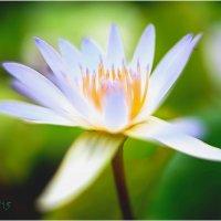 lotus14 :: yameug _