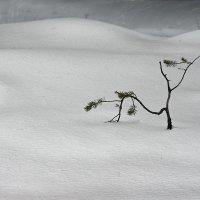 Одиночество :: Игорь Чубаров