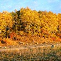 Золотая осень :: Владимир Грязных