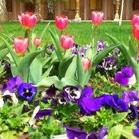 В тюльпанах всё божественно прекрасно :: Мухаббат Юлдашева