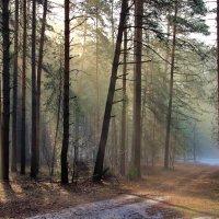 Лучей весенних перезвоны... :: Лесо-Вед (Баранов)