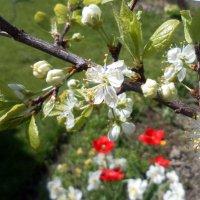 Весна в саду :: Агриппина