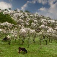 Первого апреля в Тбилиси :: Наталья Джикидзе (Берёзина)
