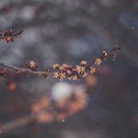 пробуждение природы :: Yekaterina Foto