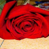 Роза :: Валерий Цуркан