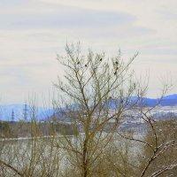 Снегири и весна :: galina tihonova