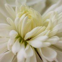 Цветок :: Евгений Кузьминов