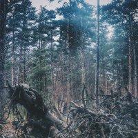 В лесу) :: Александр Носов