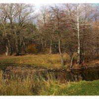 теплый день в ноябре :: георгий  петькун