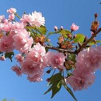 Весна! :: svetlanavoskresenskaia