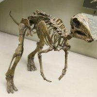 Динозавр :: Виктор Лавров