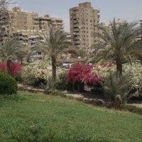 Природный парк в Каире :: Alanovip S.