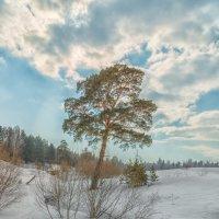 Весна опять пришла... :: Сергей Винтовкин