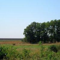 Природа в августе... :: Тамара (st.tamara)