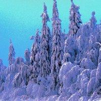 Елки в снегу :: petyxov петухов