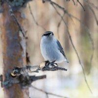 Птаха :: Илья Кибирев